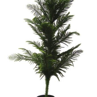 small fern